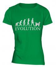 Afghan Hound Evolution Ladies T-Shirt