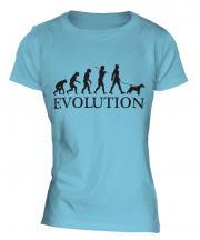Wheaten Terrier Evolution Ladies T-Shirt